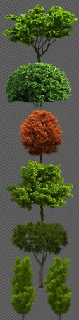 Trees on a transparent background PNG - 7